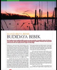 Mantabnya Bisnis Budidaya Bebek